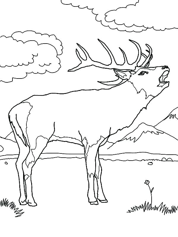 600x800 Elk Coloring Page Elk Hunting Coloring Pages Elk Coloring Pages