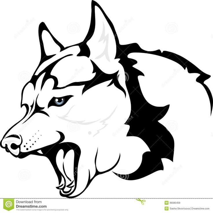 Husky Cartoon Drawing
