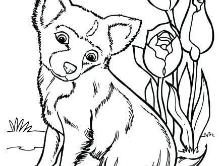 440x330 Top Rated Husky Coloring Pages Images Dogs Coloring Pages Dog