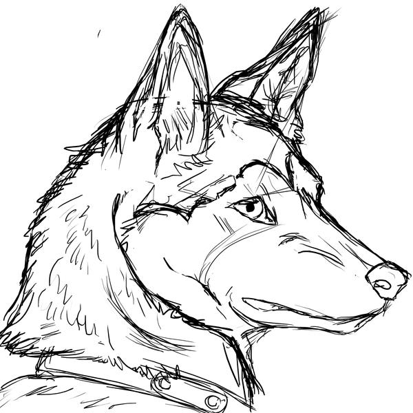 600x600 Husky Realism Sketch By Arcablue