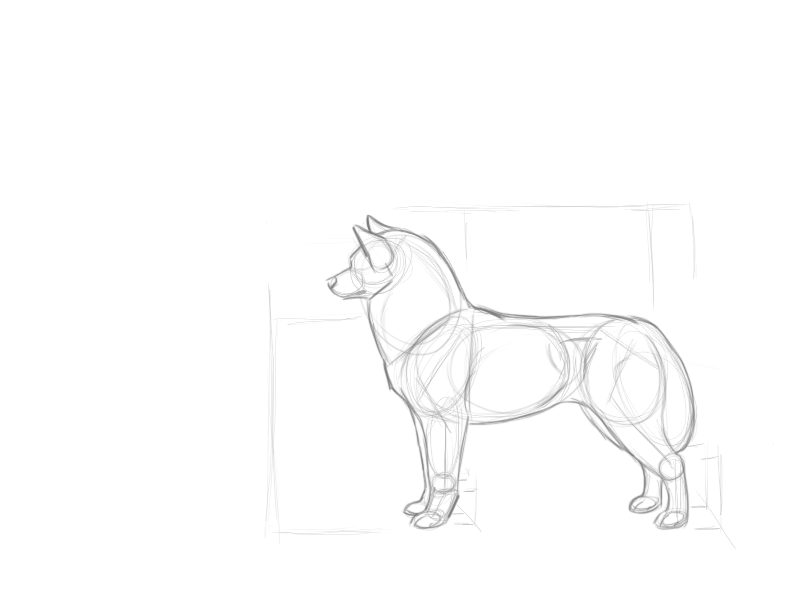 800x600 Siberian Husky Stack Sketch