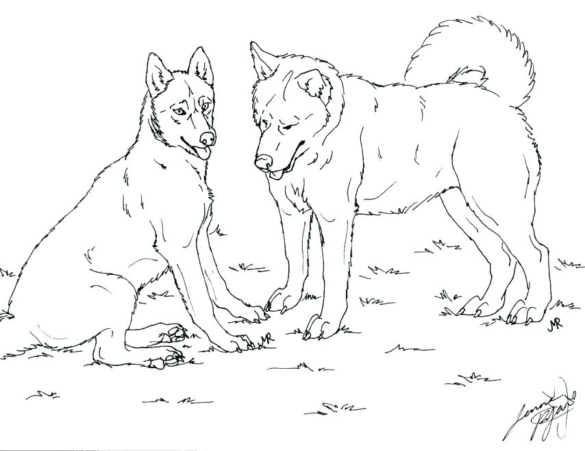 Husky Drawing at GetDrawings.com | Free for personal use Husky ...