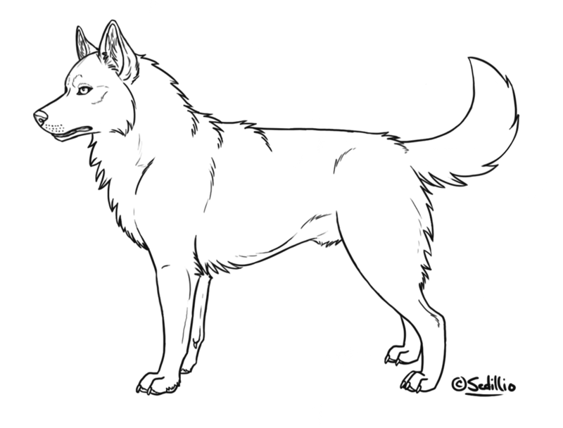 Husky Drawing at GetDrawings.com   Free for personal use ...