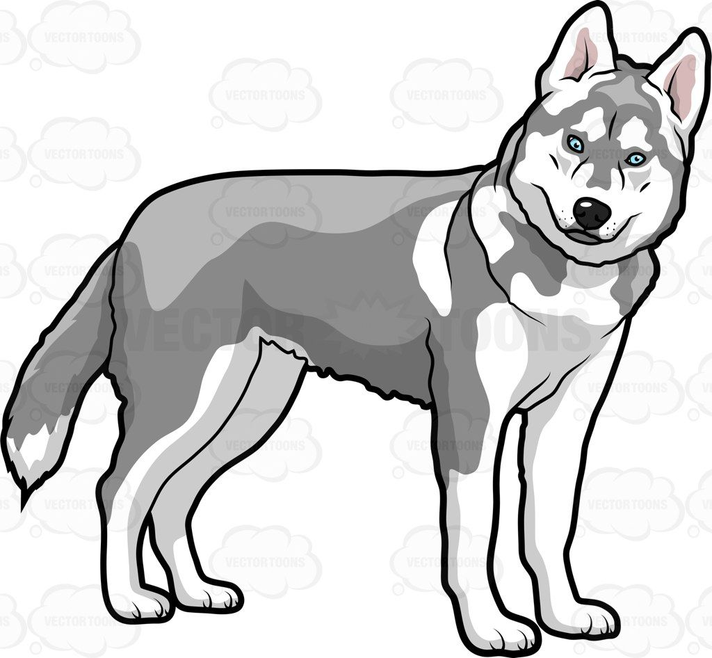 1024x946 A Big Dog Turning To Face The Camera Vector Clipart