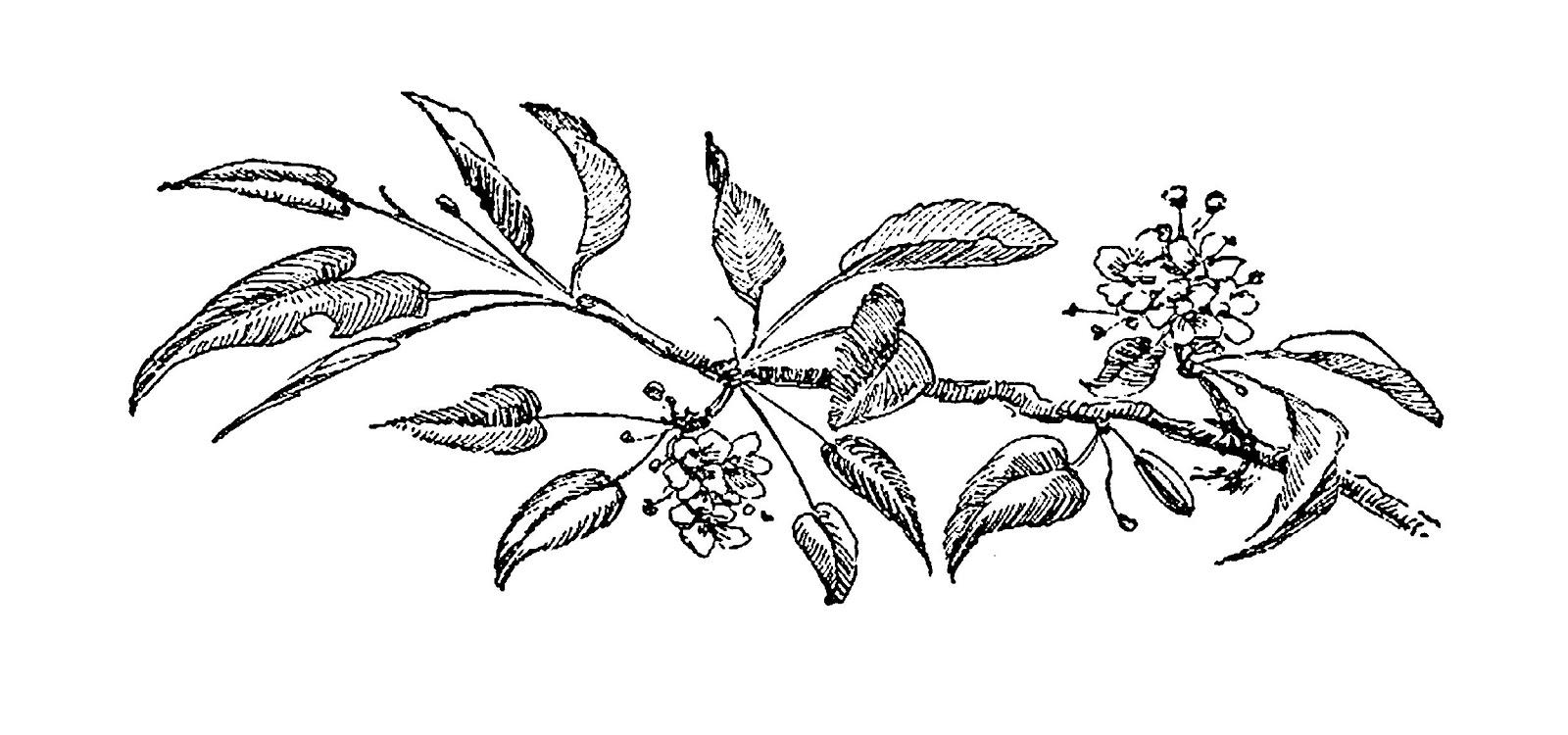 1600x750 Digital Stamp Design Flower Botanical Artwork Drawings Cherry