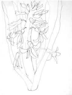 236x309 Ellsworth Kelly Plant Drawings Ellsworth Kelly