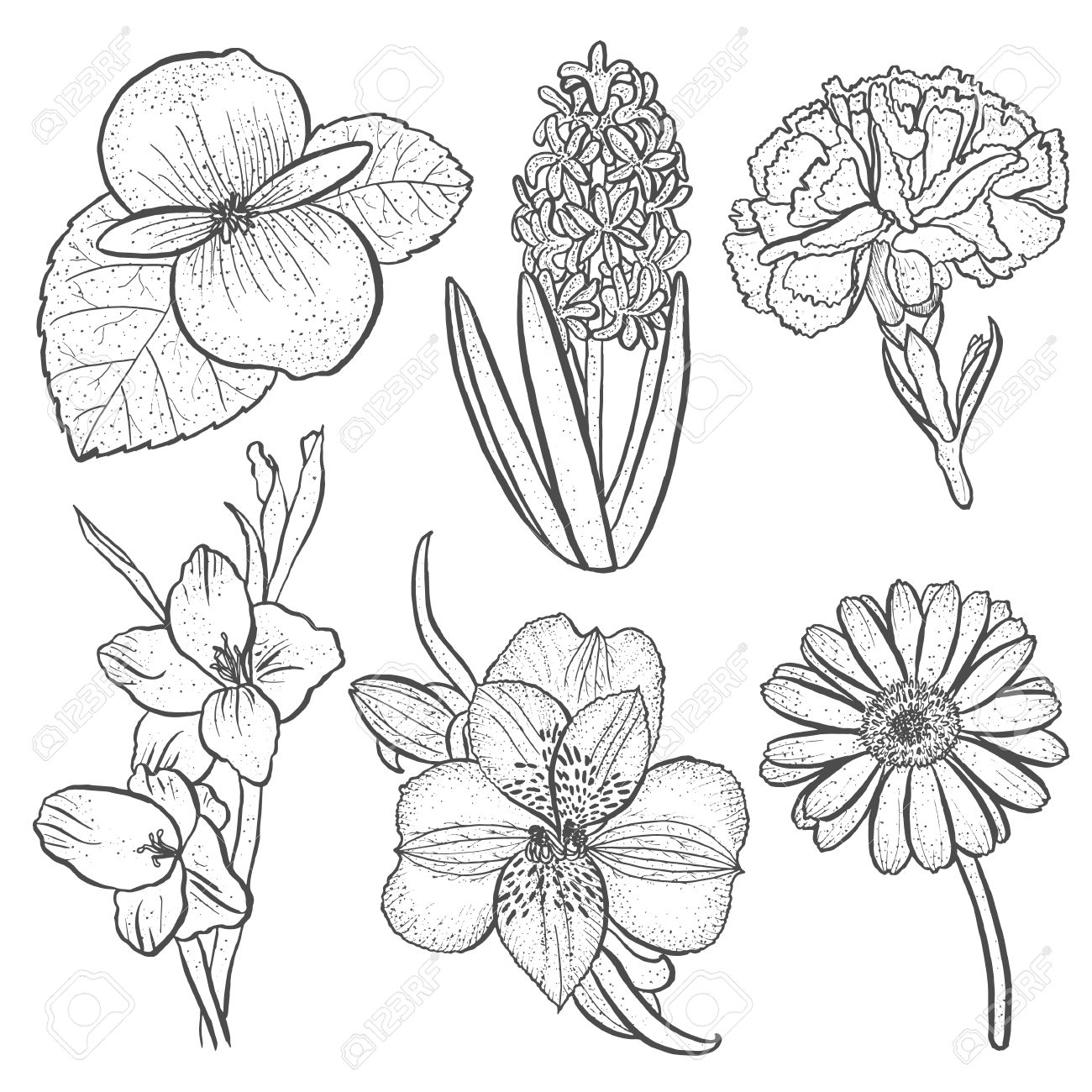 1300x1300 Set Of Flowers Alstroemeria, Begonia, Carnation, Gerbera