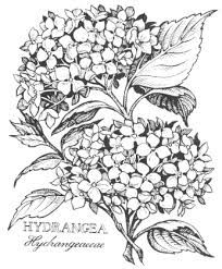 204x247 Image Result For Drawings Of Hydrangeas New Master Bedroom