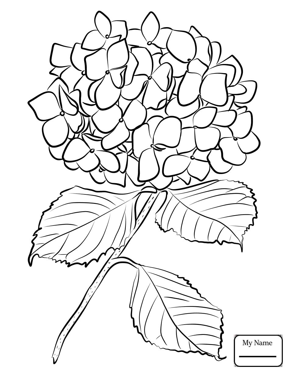 946x1224 Coloring Pages For Kids Flowers Hydrangea 1