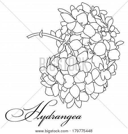 450x470 Hydrangea Images, Illustrations, Vectors