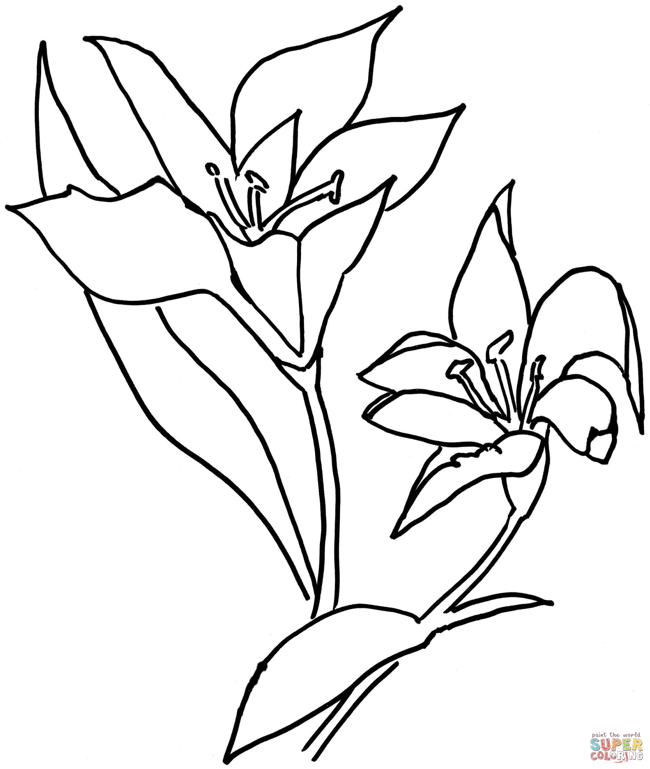 2261x2675 Oriental Lily Coloring Page Oriental Lily Clip Art