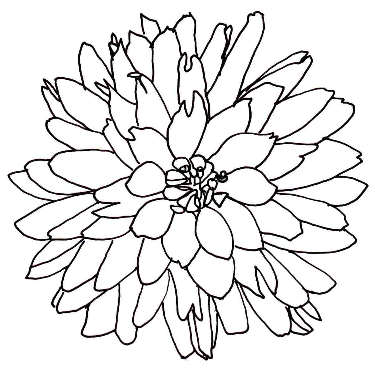1243x1226 Flower Bouquet Drawing Easy