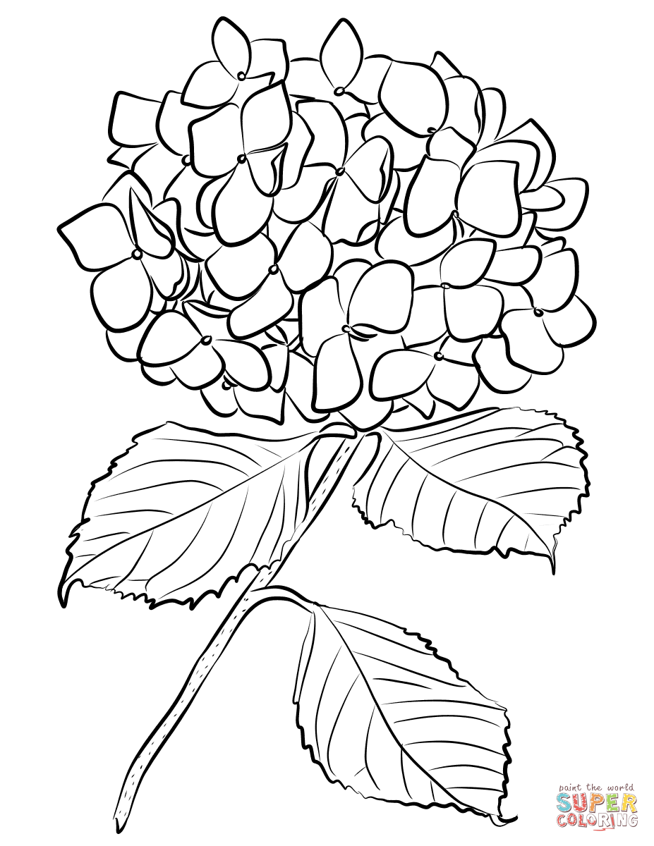 927x1200 Hydrangea Coloring Pages Free Coloring Pages