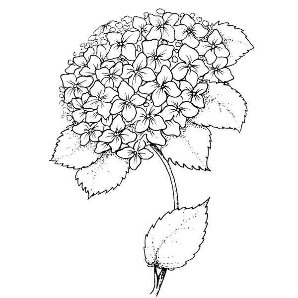 600x600 Purple Daisy Design J 233 Hydrangea
