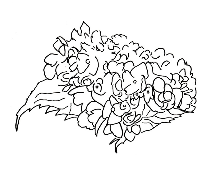 666x558 Expressive Hydrangea Line Drawing Nature