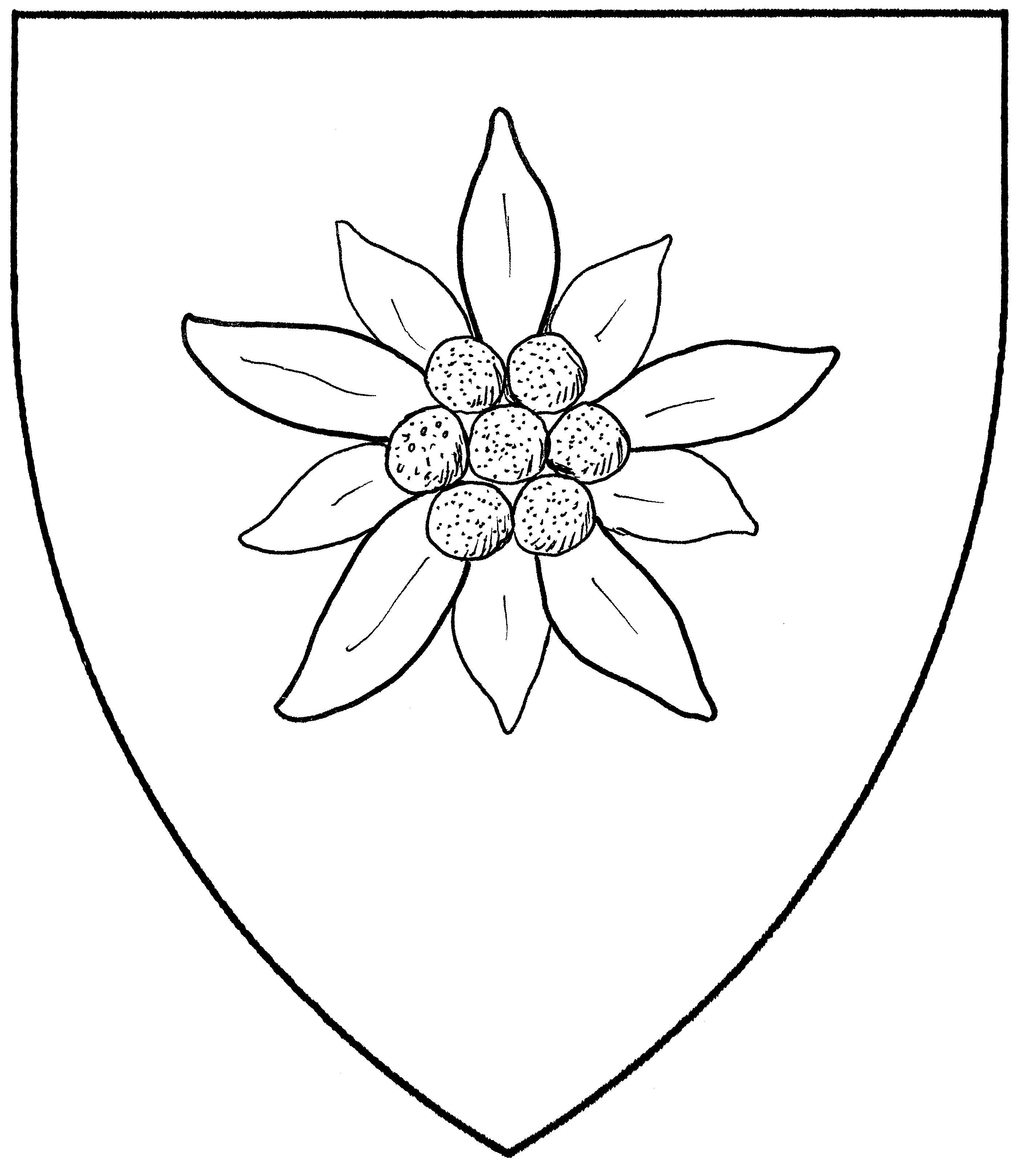 2804x3238 Drawing Hydrangea Flower