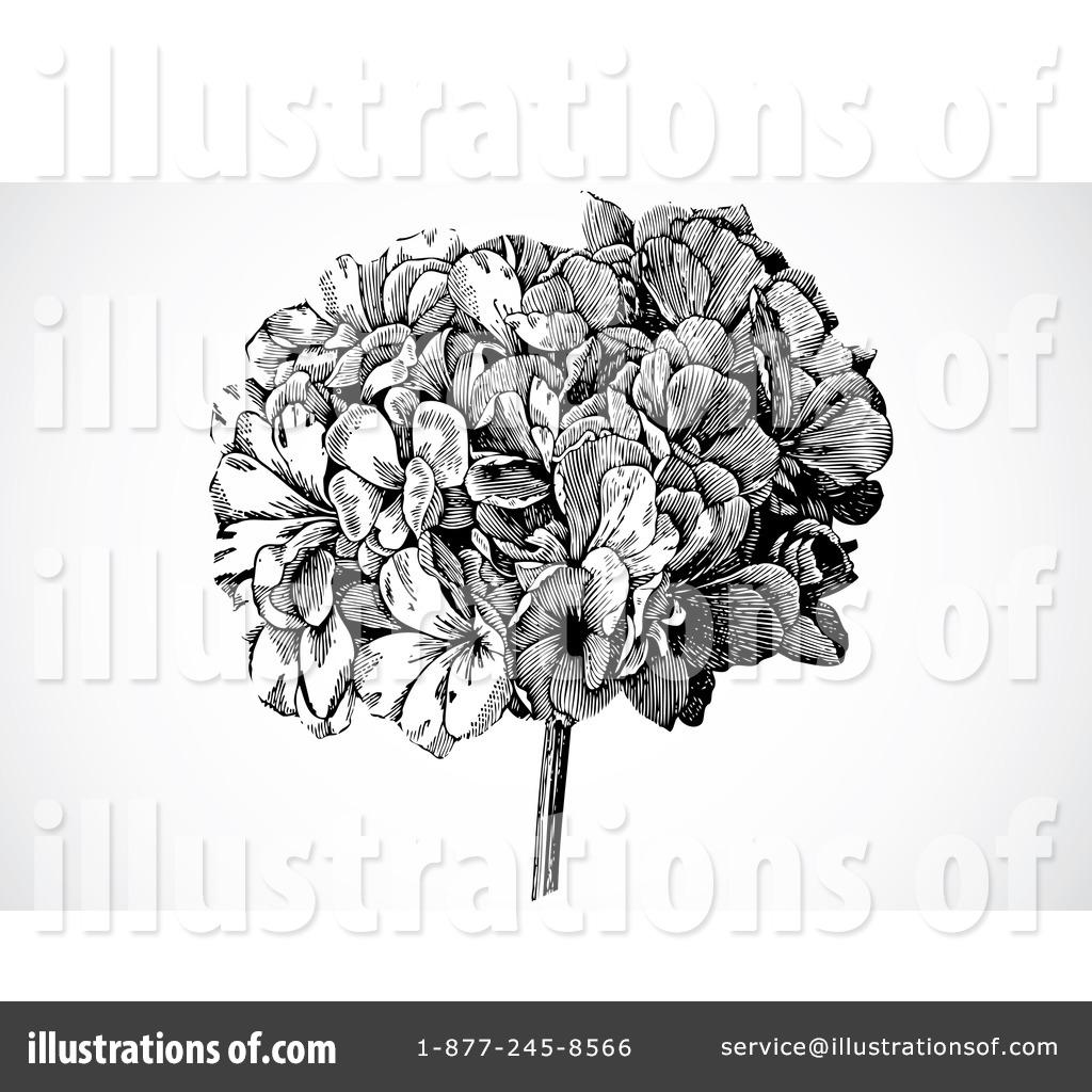 1024x1024 Hydrangea Clipart Black And White