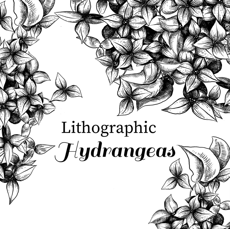 1500x1495 Lithographic Hydrangeas Clip Art, Vintage Style Floral