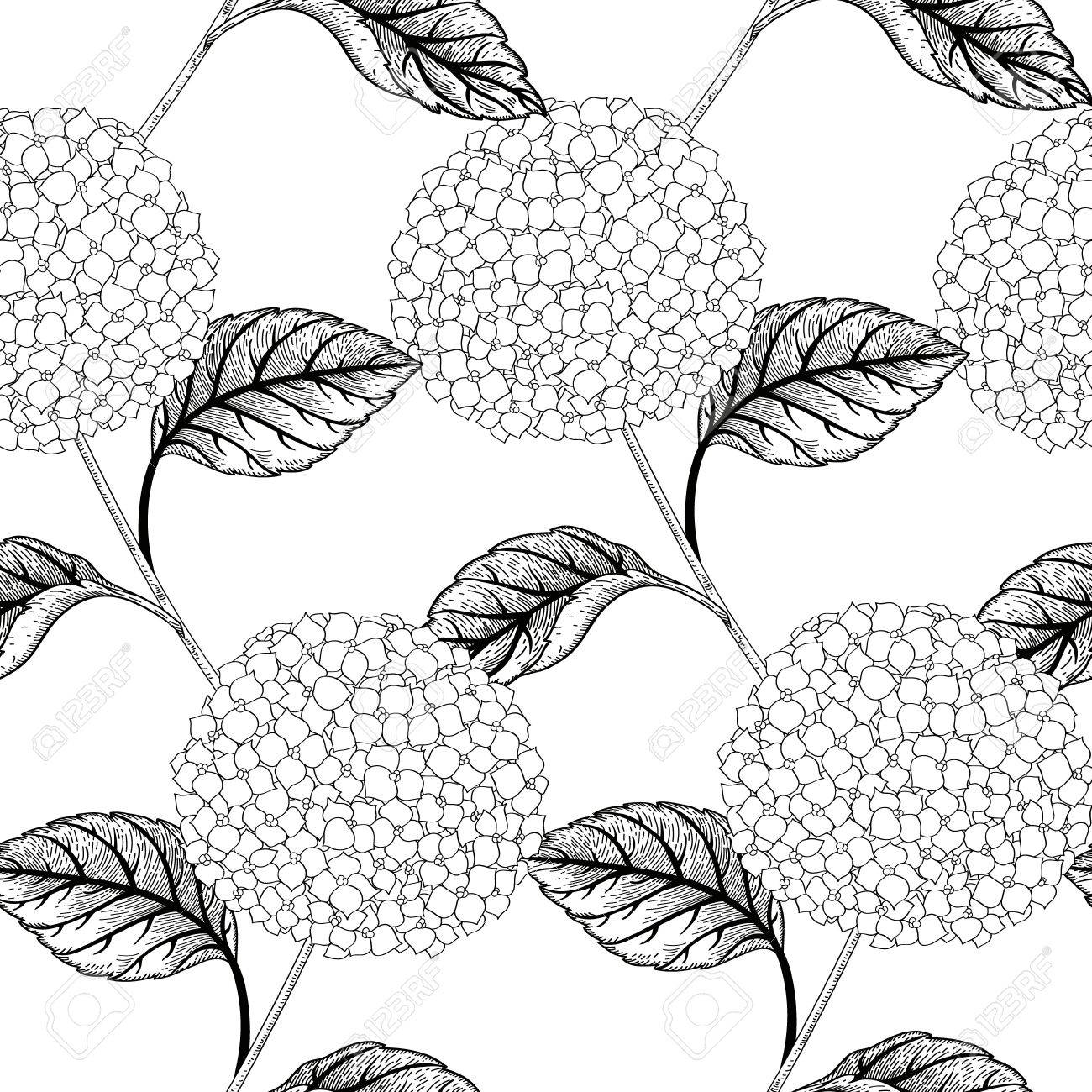 1300x1300 Seamless Vector Pattern With Flowers Hydrangeas. Black And White