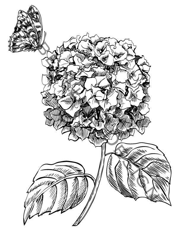 600x776 White Hydrangea Clipart