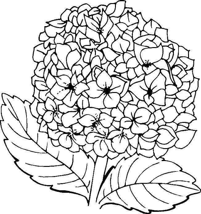 652x695 Hydrangea Flower Line Art Printprintablewall Decorblack