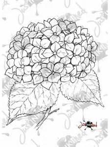 225x300 Hydrangea Line Drawing