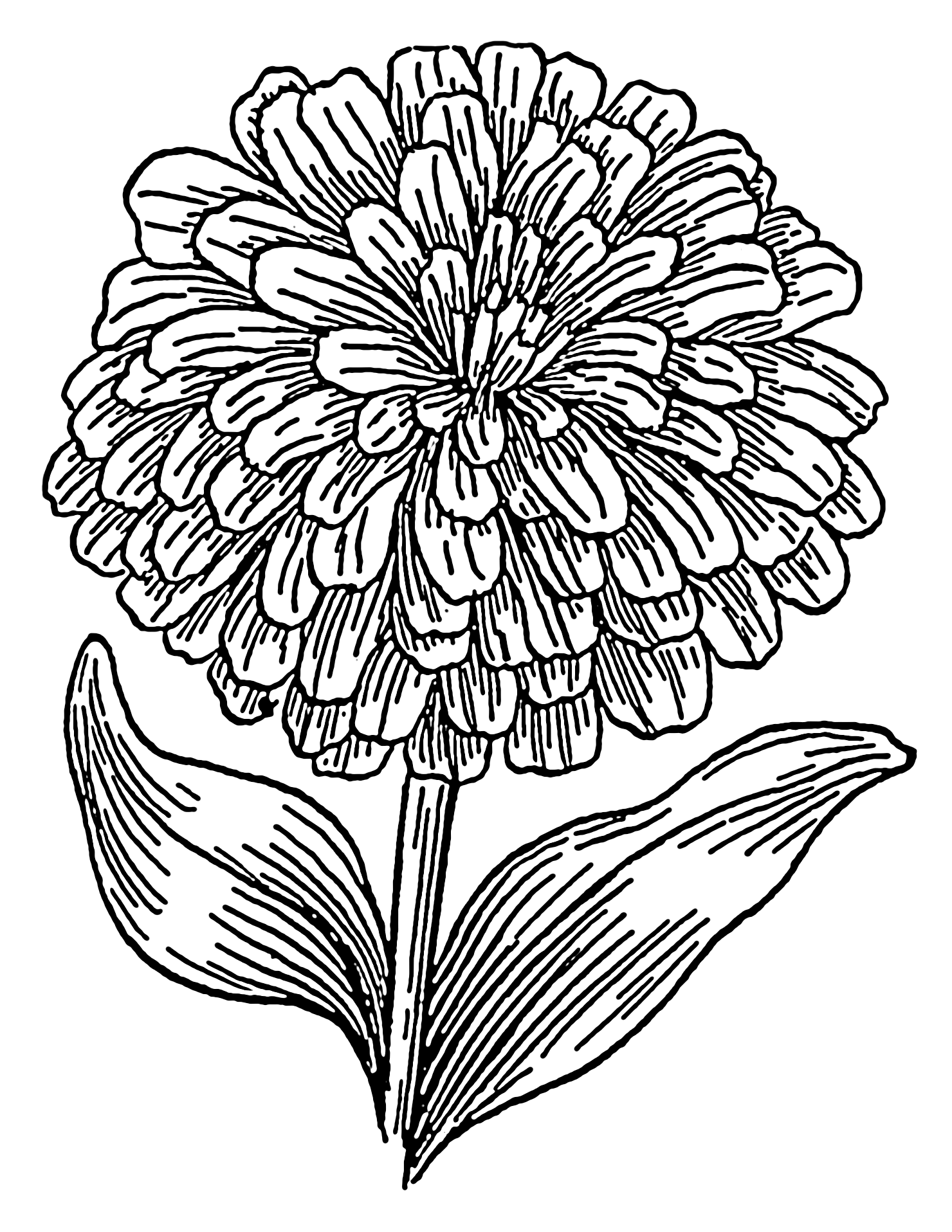 1480x1916 Black And White Hydrangea Drawing