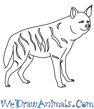 300x350 How To Draw A Striped Hyena