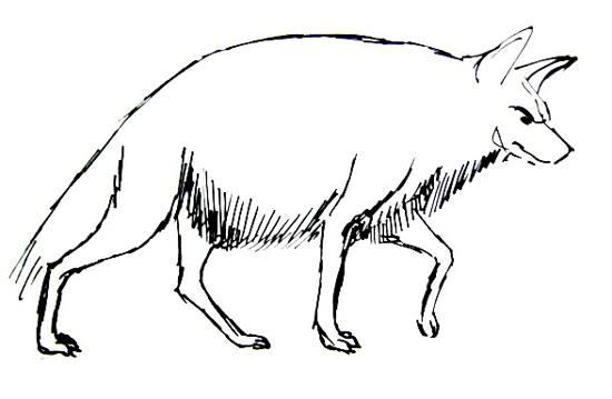 550x359 How To Draw A Hyena