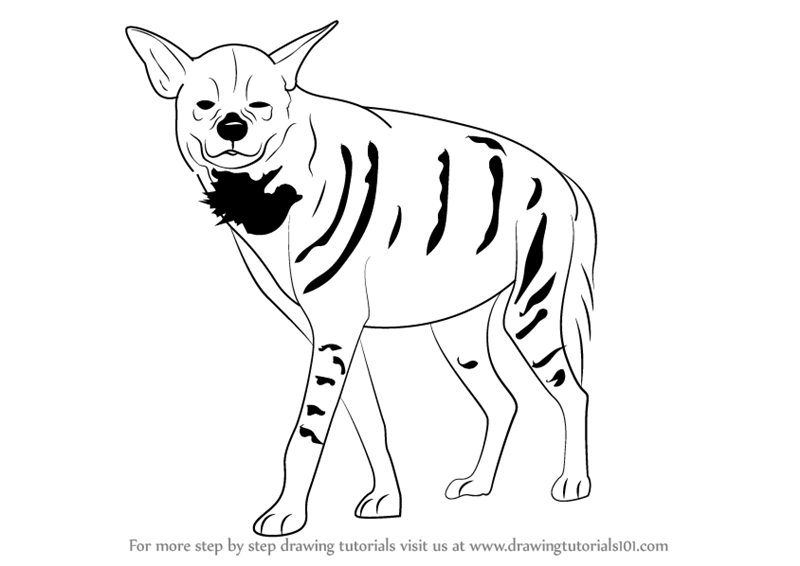 800x566 Learn How To Draw A Striped Hyena (Wild Animals) Step By Step