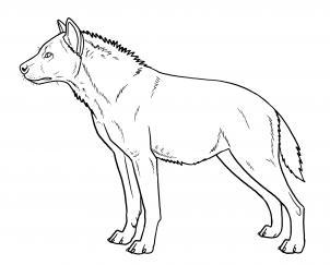 302x243 How To Draw Hyenas Step 15 Hobbies Hyena, Draw