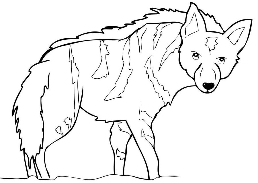 900x640 Coloring Pages Hyena, Printable For Kids Amp Adults, Free