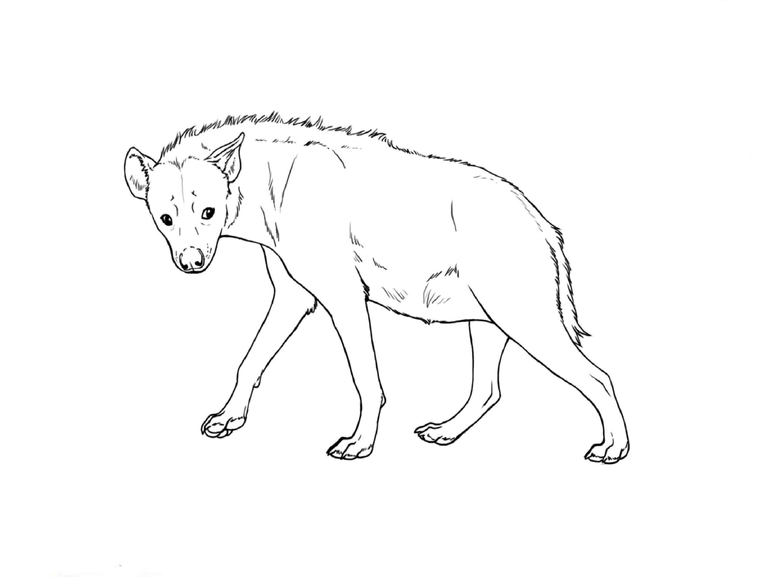 2592x1944 How To Draw A Hyena
