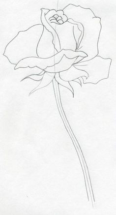 236x437 Easy Pencil Drawings Of Flowers Graphite Pencil Drawing Tutorial