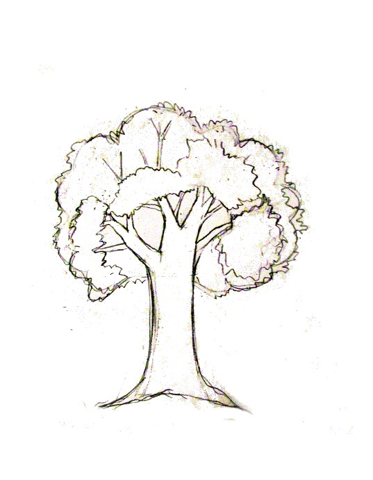 537x690 How To Draw A Tree