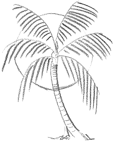 400x498 How To Draw Palm Trees In Front Of The Sun Drawing Lesson
