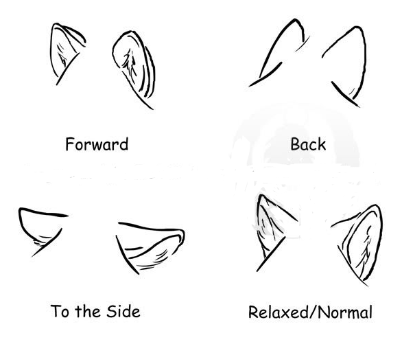 586x498 How To Draw Wolf Ears Annagrace's Pins Wolf
