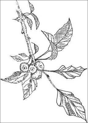 287x402 Pencil Sketches