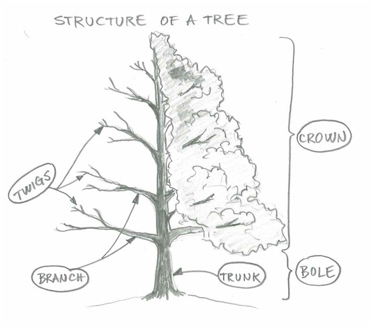 532x470 Draw A Tree Simply And Easily