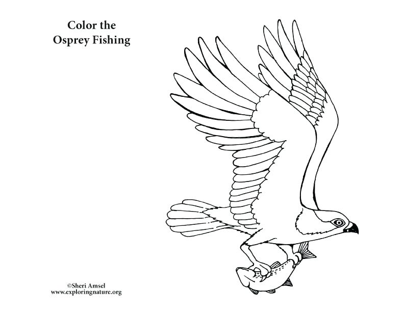792x612 Fishing Coloring Pictures Genesisar.co