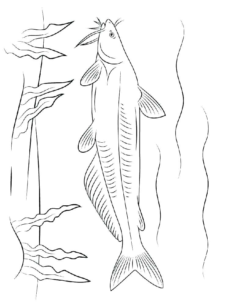 750x1000 Catfish Coloring Page Coloring Pages Iceberg Iceberg Maze For Big