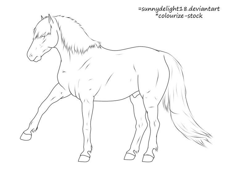Icelandic Horse Drawing