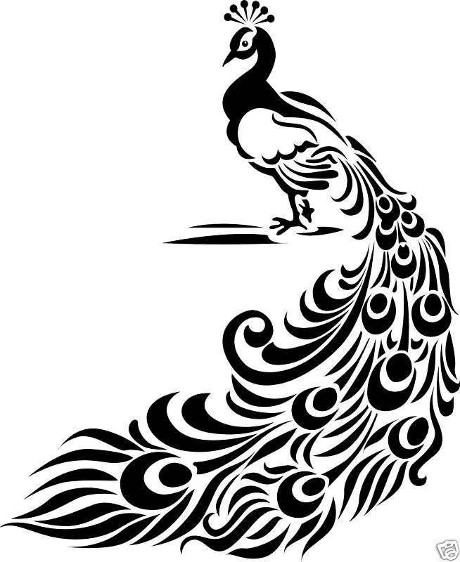 654x800 Peacock Design Black And White Collection