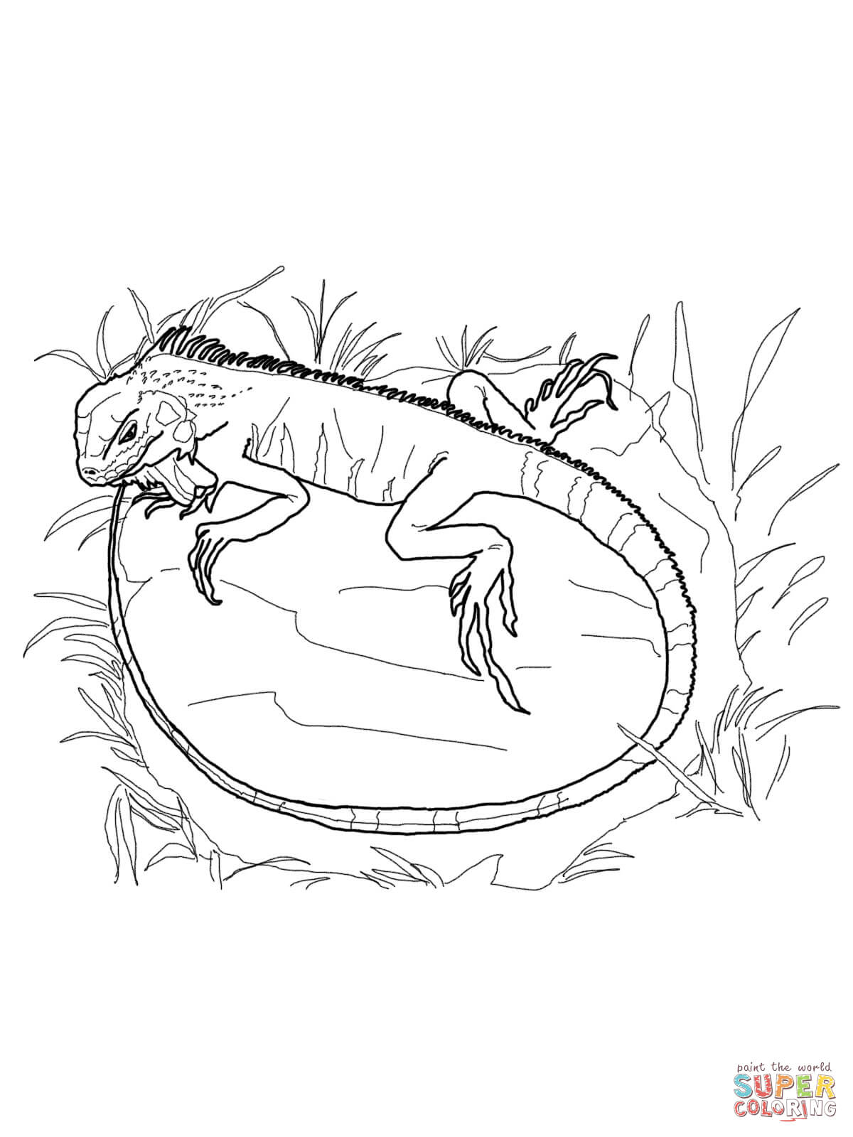 1200x1600 Green Iguana Coloring Page Free Printable Coloring Pages