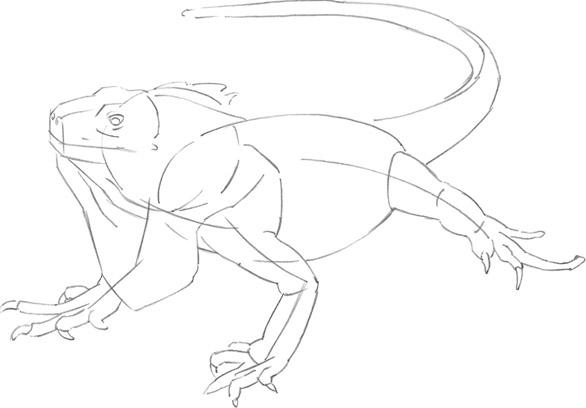 586x408 Iguana
