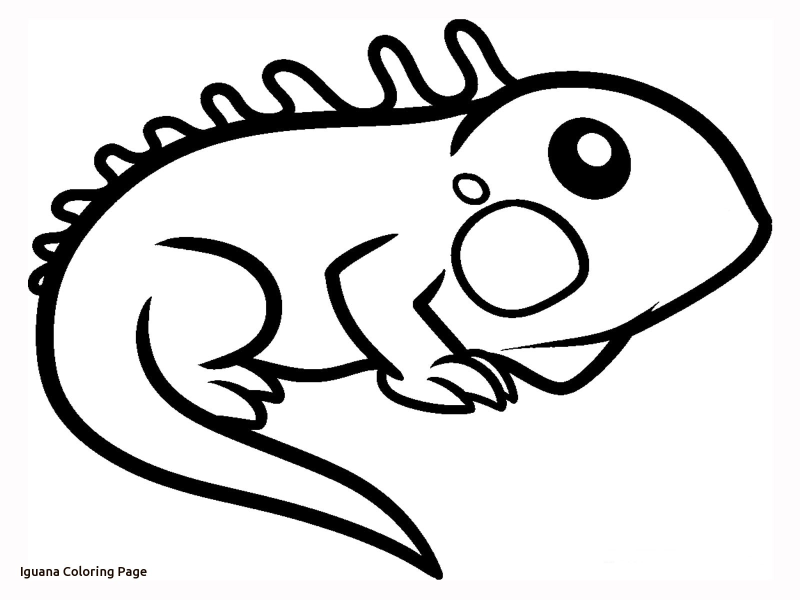 1600x1200 Iguana Coloring Pages Free Draw To Color