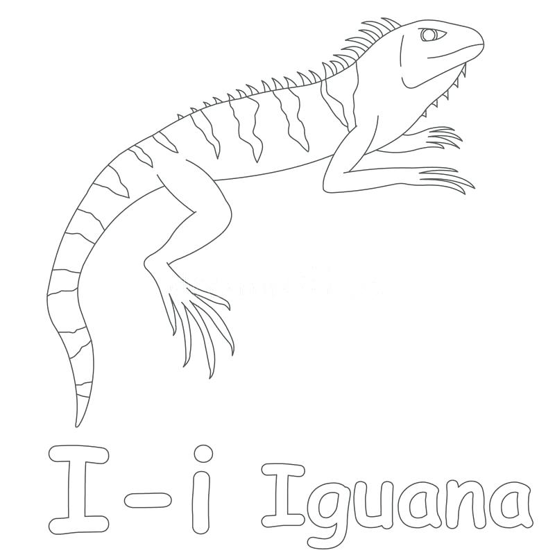 800x800 Iguana Coloring Pages Iguana Coloring Pages Medium Size Of I Is