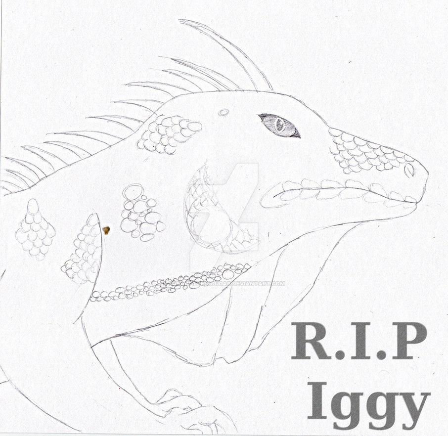906x882 Iguana Drawing By Shay Wolf