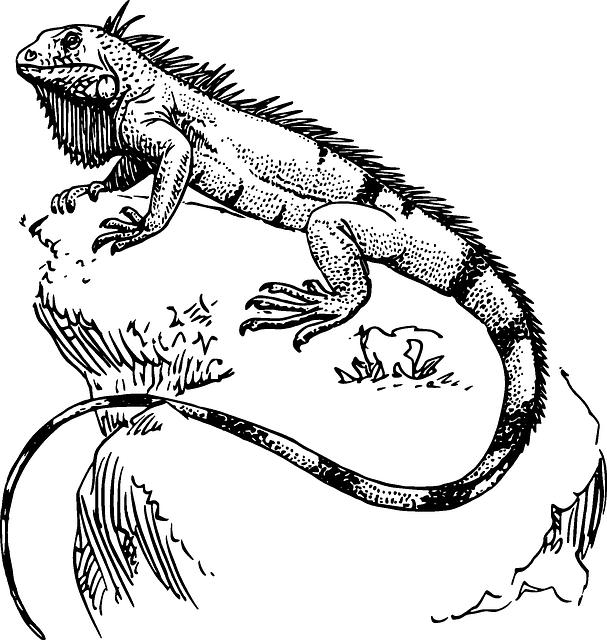 607x640 Iguana Para Pintar Art Tatt And Drawings