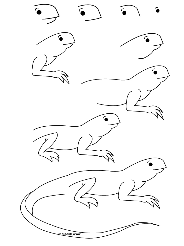 768x1024 Animals Drawing Step By Step